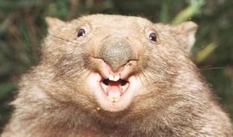 groundhog day quora wombats and media