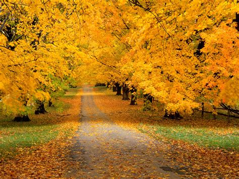 Car Wallpaper Desktops Screensavers For Fall by Autumn Season Wallpapers Screensaver