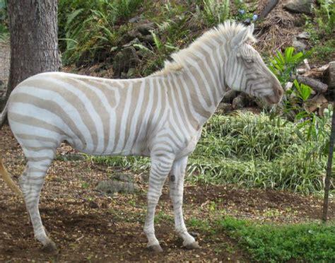 imagenes de animales albinos 191 es verdad que existe el albinismo en los animales
