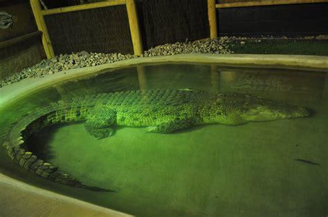 Reptile Garden South Dakota by Reptile Gardens Near Rapid City South Dakota Our Traveling Tribe