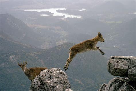 imagen de cabra de montana foto gratis