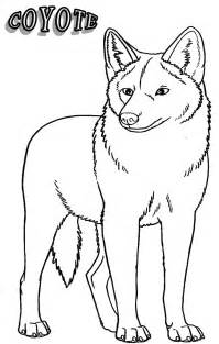 coyote coloring page printable coyote coloring pages for cool2bkids