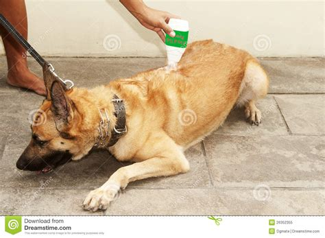 flea powder for dogs flea and tick powder royalty free stock photo image 26352355