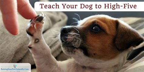 tricks to teach your puppy tricks to teach your archives raising your pets naturally with tonya wilhelm