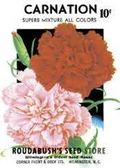 facts about carnations food facts trivia carnation