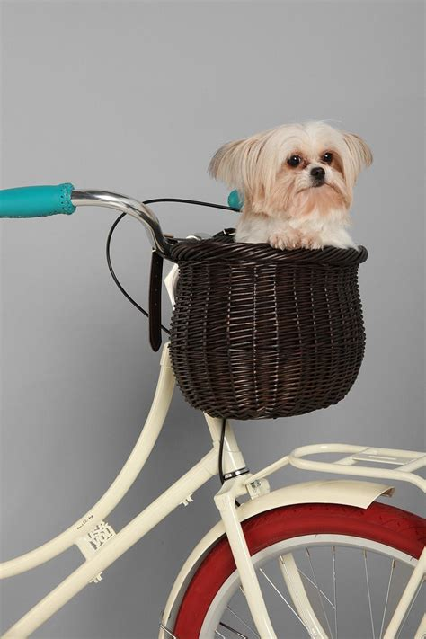 bicycle baskets for dogs 1000 images about bicycle s s on bike