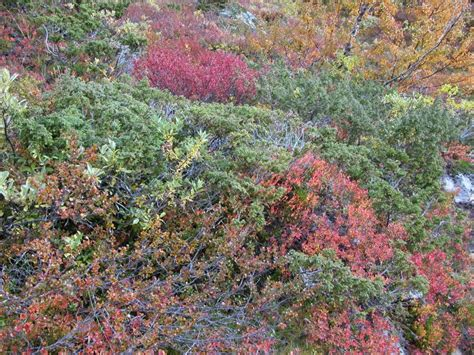flowering shrubs in florida hardy shrubs in california care of hawthorn