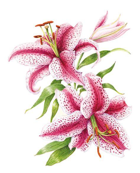 descargar botanical drawing in color libro e lilium orientalis by marion bybotany arte bot 225 nico by marta chirino