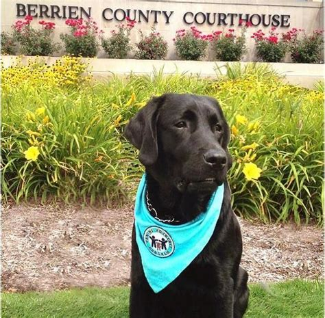 Michigan Court Of Appeals Search State Appeals Court Affirms Use Of Quot Support Dogs Quot In Courtrooms Michigan Radio