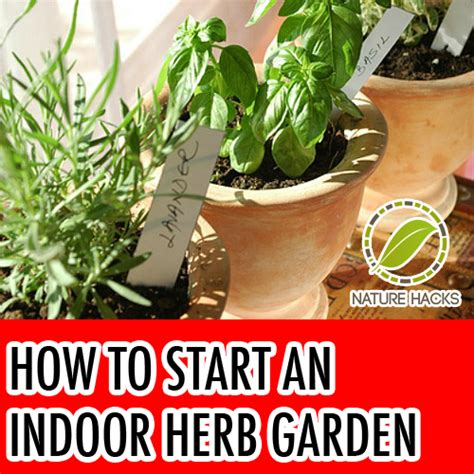 how to grow a herb garden growing an indoor herb garden eat right ontario 17 best