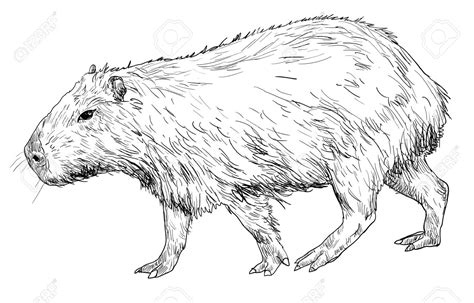 capibara clipart clipground