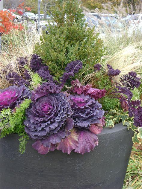 Winter Gardening Ideas Gardening Creating A Winter Container Garden