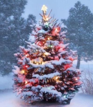 christmas tree permits winter park times