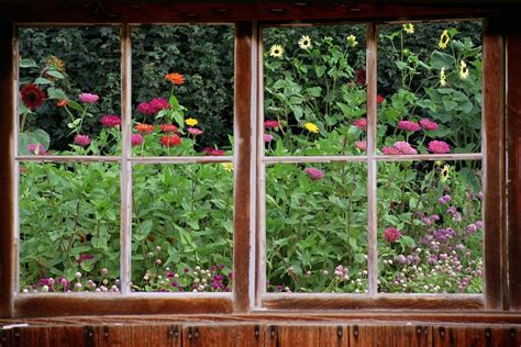 window gardening window view of garden www imgkid the image kid has it
