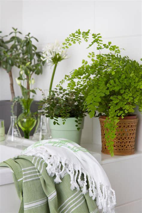 piante per bagno idee per il bagno come cambiare look dalani magazine