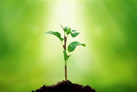 images of plants 2048 plants