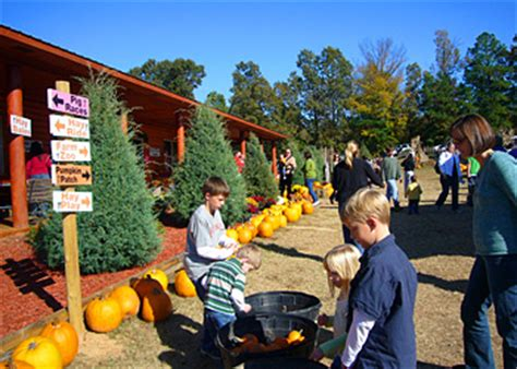 christmas tree prices in arkansas motley s pumpkin patch and trees rock arkansas central arkansas favorite