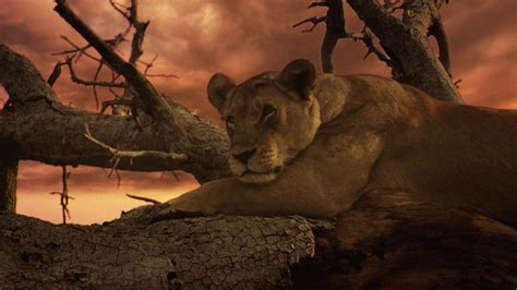 film lion s den the last lions an unapologetic glimpse of brutality