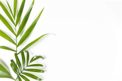 minimalist plants minimalist background with green leaves on white photo