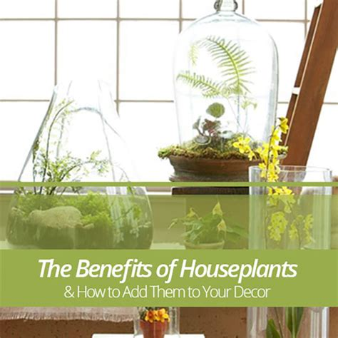 benefits of houseplants the benefits of houseplants and how to add them to your