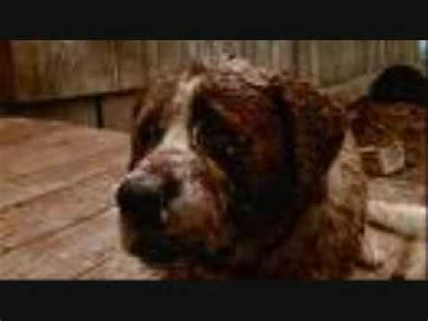 cujo the the killer cujo