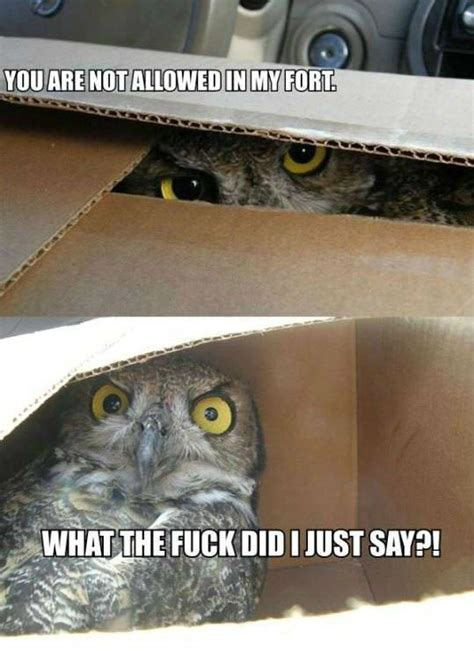 Funny Owl Memes - 20 hilariously adorable owl memes