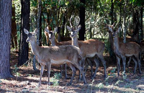 deer attacks ohio prisoner in own home due to deer attacks newsradio wina