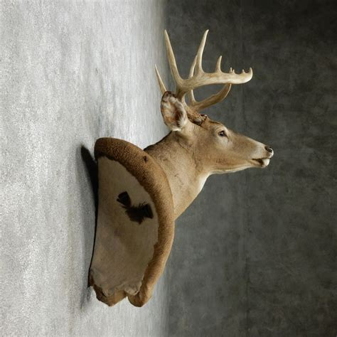 Wall Pedestal Deer Mount whitetail deer wall pedestal mount for sale 14104 the taxidermy store