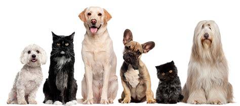 bonafido approved bonafido pet supplies