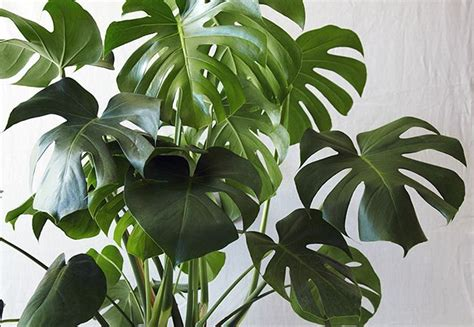 easy  care  plants  busy homeowners part