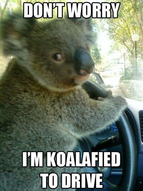 Wrrrry Meme - don t worry i m koalafied weknowmemes