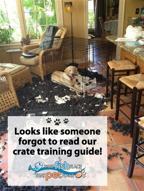 best place to put dog crate in house top five dos and don ts of crate training that pet blog