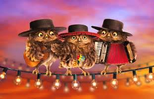 owl mariachi band 1 card 1 envelope avanti lenticular motion birthday card from curiosities