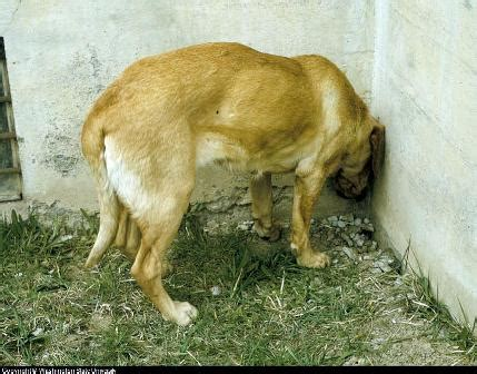 pressing in dogs seizure disorder types causes symptoms treatment