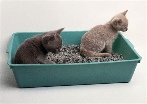 how to a to use a litter box care and maintenance