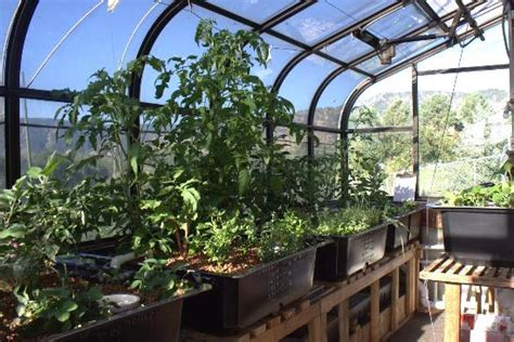 Aquaponic Gardening Growing Fish And Vegetables Together Aquaponic Vegetable Garden