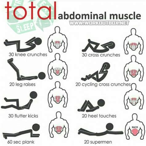 17 best ideas about abdominal muscles on ab workouts abdominal exercises and