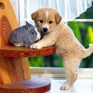 show me pictures of baby puppies bunny with puppy baby bunnies photo 19895341 fanpop show me pictures of