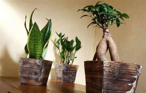 piante bonsai da interno piante d appartamento piante da interno quali sono le