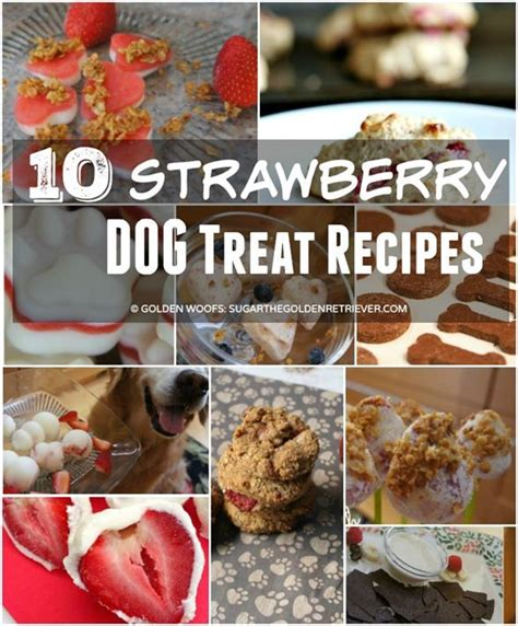 can dogs eat strawberries which foods can dogs consume