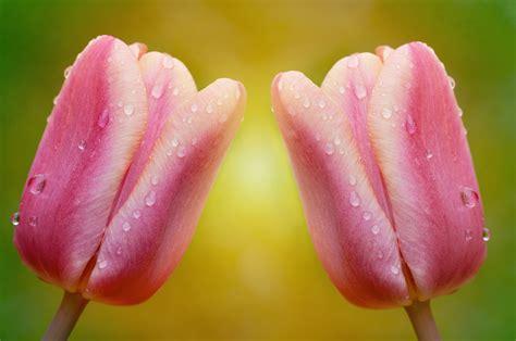 gambar mekar menanam daun bunga titisan hujan bunga