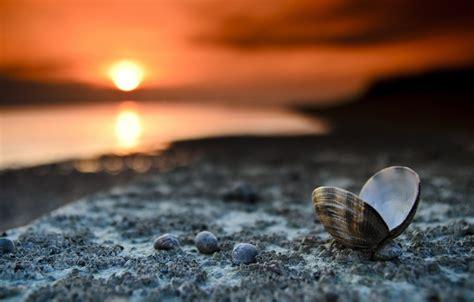 Landscape Photography With Macro Lens Wallpaper Macro Shore Shell Landscape Sunset Images