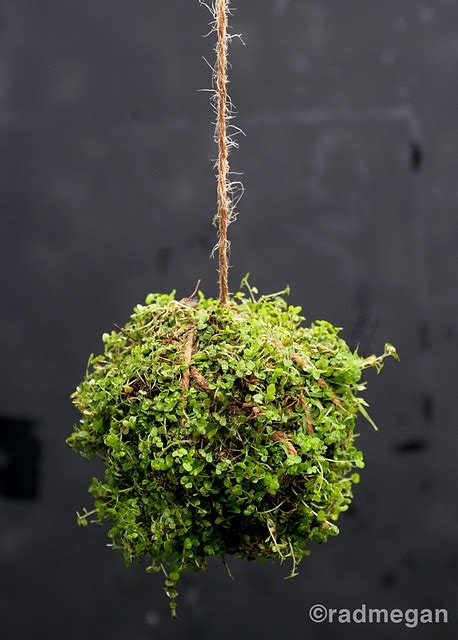 picture of hanging string garden
