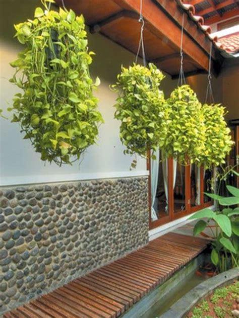 Pot Anggrek Dari Pakis tips memulai tanaman gantung ragam tanaman
