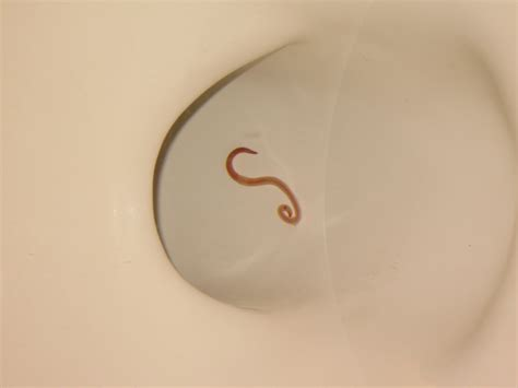 thin red worms in bathroom stuff by cher worms are yucky