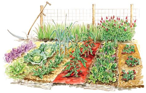 how to start a vegetable garden with easy steps front