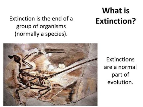 what is background extinction ppt what is extinction powerpoint presentation id 2793291