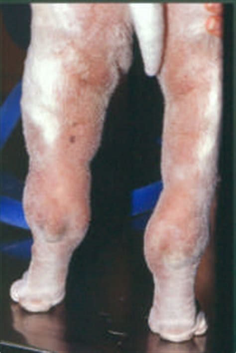 cellulitis in dogs 6 09 09