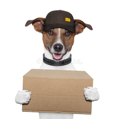 dog delivery post stock photo image  cardboard