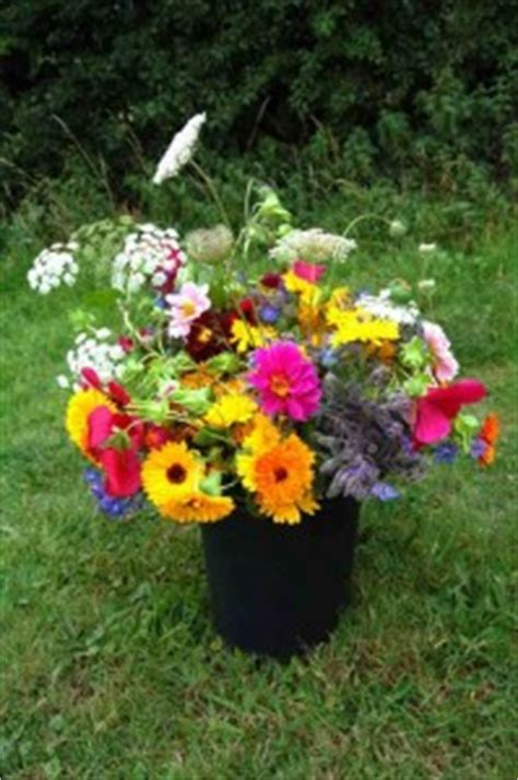 flowers for your garden our top 50 flowers for cutting higgledy garden